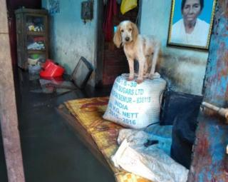 Dog rescued in Kerala