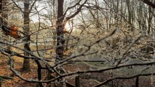 Frosty trees in low light