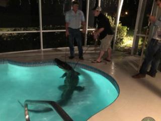 پلیس با یک متخصص به دام انداختن تمساح وارد محوطه شد