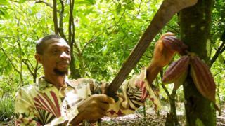 Adams Muhammed cocoa farmer