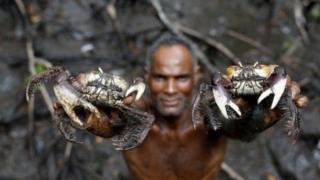ਬ੍ਰਾਜ਼ੀਲ ਵਿੱਚ ਮੱਛੀ ਤੇ ਕੇਕੜੇ ਫੜਣਾ ਕਿਉਂ ਹੈ ਖ਼ਾਸ