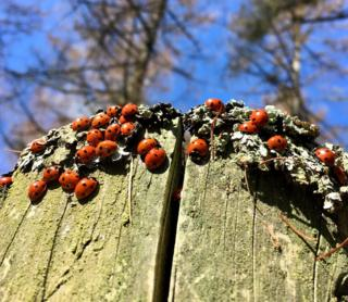 loveliness of ladybirds