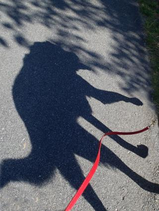 Shadow of a dog