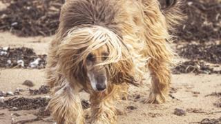 A windswept dog on the beach