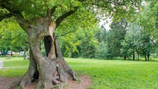 The Hollow tree, Gnoll Country Park, Neath Port Talbot