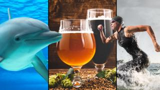 Dolphin, brewery and triathlete