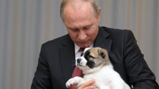 Владимир Путин с щенком Алабая