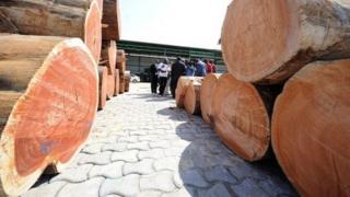 Un partenariat avec le gouvernement gabonais a permis de transformer des grumes de kevazingo pour les exporter en produits finis en Chine