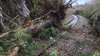 A tree fallen on the Blaenau Ffestiniog branch line