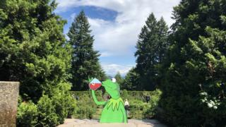 Kermit the Frog sips tea in Portland's Rose Garden