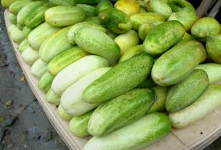 Pile of wild cucumbers