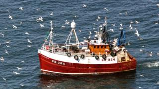 Gannets and fishing boat