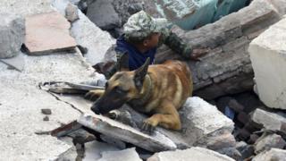 Un perro y su guía buscan entre los escombros en Ciudad de México.