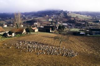 Elevage d'oies à Sarlat-la-Canéda, en Dordogne, France. (Photo by François DUCASSE/Gamma-Rapho via Getty Images)