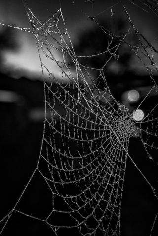 A black and white spiders web