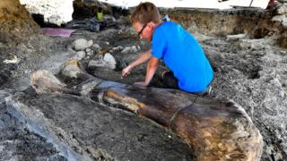 Maxime Lasseron inspects the femur of a sauropod, 24 July, at the paleontological site of Angeac-Charente
