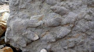 Dinosaur footprints near Hastings