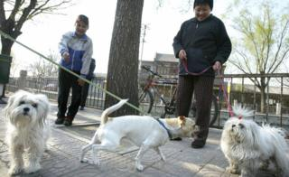 People walking their dogs in China