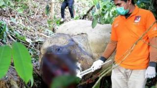 Bunta, gajah yang banyak membantu BKSDA Aceh dalam menggiring gajah liar yang berkonflik di berbagai tempat, mati terbunuh Juni 2018.