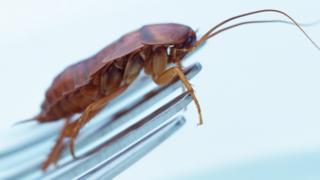 Cockroach on a fork