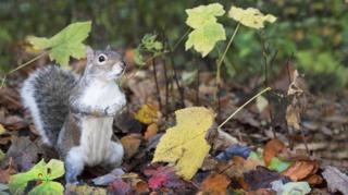 Squirrel at the Botanic gardens Glasgow