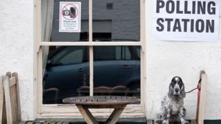 Dog on a chair outside a polling station