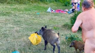in_pictures Naked man chasing wild boar