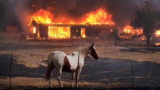 A horse stands in front of a house engulfed in flames from the Clayton Fire in Lower Lake, California, Sunday, 14 August 2016