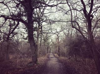 Taken on a cold and windy run through Brasenose Woods
