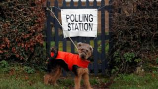 Dog outside a polling station in Northumberland