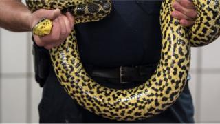 Des policiers indonésiens ont mis un serpent vivant autour du cou d'un suspect pour obtenir ses aveux.