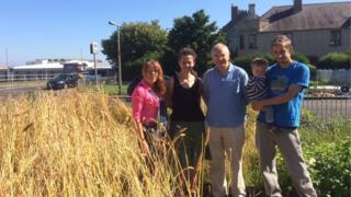 Wheat in Granton Pic: Morag Kinniburgh
