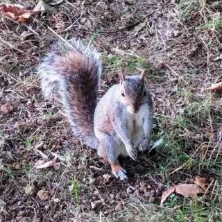 Squirrel at Christ Church