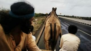 Akram Feroze travels by camel as part of his mission to travel along India's border