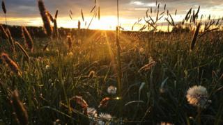 Field in Charlton near Otmoor