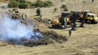 Plant destruction in Propriano, Corsica, 27 Jul 15