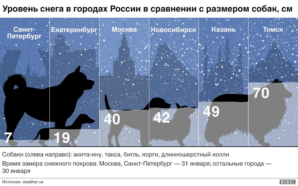 Инфографика с собаками и снегом