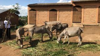 burund, france, ânes, colère, diplomatie, bujumbura, paris
