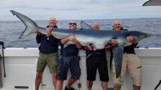 Men holding shark