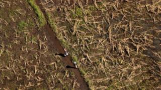 Women walk past flattened crops near John Segredo north of Beira, Mozambique, in the aftermath of Cyclone Idai, March 24, 2019