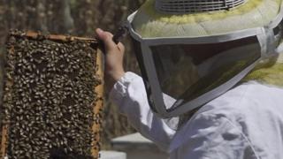 نحال يجني العسل في غزة