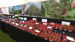 Strawberries at Kent County Show