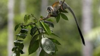 درختان که منابع جذب دی اکسید کربن هستند چطور با گرمایش زمین مقابله می کنند؟