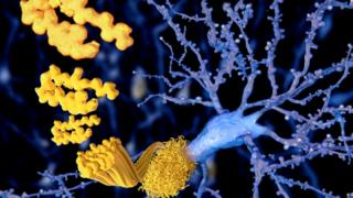 Células en el cerebro.