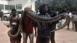Man wey carry snake