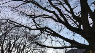 Anti-pigeon spikes on trees