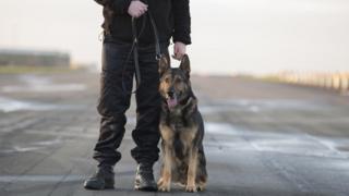 Police dog Finn and handler