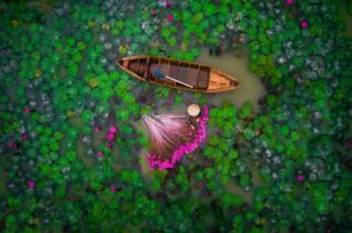 helios1412在在越南湄公河三角洲航拍一名女子在池塘里收获百合的照片获得第二名。