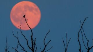 Super Blue Blood Moon: What is it and can I see it? - CBBC