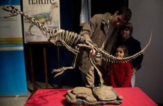динозавр, скелет